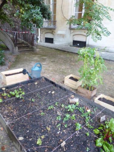 Dans le bac de culture principal, nous expérimentons la permaculture. Des blettes, des fraises, des lupins de russel, des navets, des radis et du cresson cohabitent actuellement dans le bac!