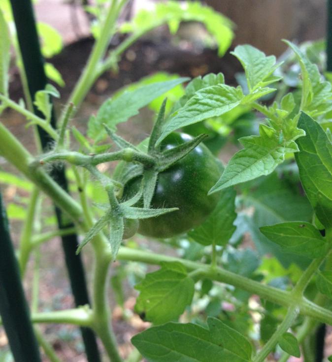 Une tomate cerise
